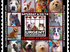 """6/25 Please Share! SUPER URGENT tap picture  BEAUTIFUL LIVES OF DOGS TO SAVE 6/25TO BE DESTROYED STARTING 12NOON PLEASE SAVE US WE ONLY HAVE A FEW MINS / HOURS TO LIVE BEFORE WE GO TO DOGGY HEAVEN THANK YOU PLEASE REPIN AND SHARE THIS INFORMATION  TIME IS CRITICAL THANK YOU IRISH : . Please share! The shelter closes at 8pm. Go to the ACC website( ASAP to adopt a PUBLIC LIST dog (noted with a """"P"""" on their profile) and/or work with a rescue group if you can adopt/foster ANY of our dogs on the…"""