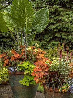 Elegant Calypso Container Gardening, Portland Oregon   Summer Patio Containers