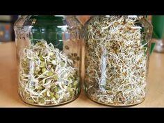 Sprossen und Keimlinge keimen lassen (Anleitung) - Vegan mit Rohe Energie