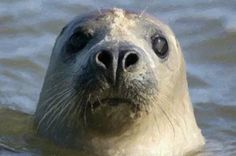 Learn English Alphabet With Seal - Animation