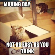#funnymovingmeme #moving #relocating