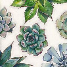 Image de art, plants, and succulent