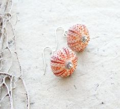 Sea Urchin Shells for Crafts
