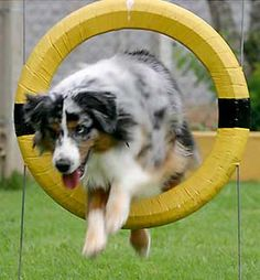 I've always wanted to teach a dog agility, I'm totally doing it with Zoe!!