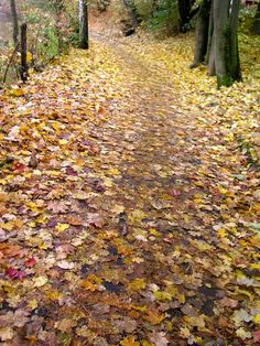 Making Peace With Seasons-- using natures cues to find refreshment and energy throughout the year.