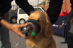 Invisible Fence of Harrisburg and the Pennsylvania National Fire Museum partnered to donate a total of 18 pet oxygen mask kits to their local fire departments!   Special thanks to the dog models who helped demonstrate!