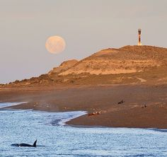 Punta Norte, Argentina