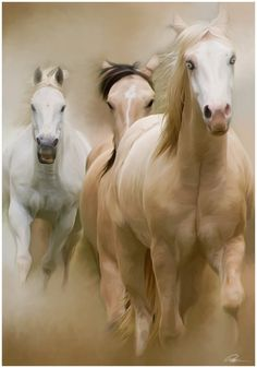 A love I will always have, is with horses!