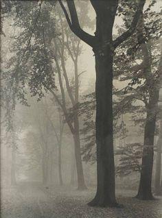 Max Baur: Im Nebel