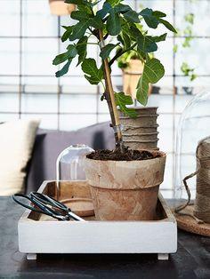Rostigt armeringsjärn blir en perfekt odlingsvägg.