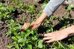 Ti tips for å få orden i hagen fort