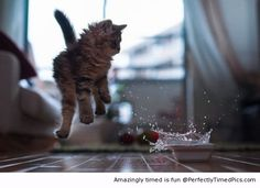Water surprise | Perfectly Timed Pics