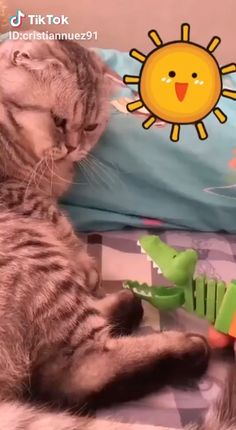 Ideas Funny Baby Memes Humor Pets For 2019 Funny Dog Memes, Funny Cats And Dogs, Funny Animal Memes, Funny Cat Videos, Cute Funny Animals, Cute Baby Animals, Cat Memes, Cute Cats, Memes Humor