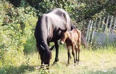 Outer Banks wild horse herd gets a fall foal Fall Baby, Wild Horses, Banks, North Carolina, Animals, Animales, Animaux, Animal, Animais
