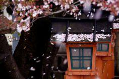 kyoto/ Photo by Japan Travel, Kyoto, Amazing Places, The Good Place, Asia, Photography, Fotografie, Fotografia, Photograph