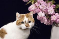 八重桜と一緒に
