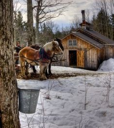 Winter farm ~~ Sugaring; by Jerry Lasky.  (Beautiful, peaceful feelings come to mind looking at this!)