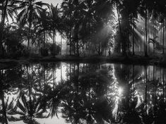 Picture of coconut trees reflected in flooded paddy, Kerala, India (National Geographic)