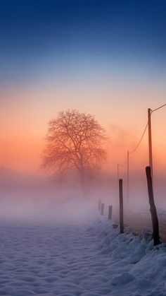 Winter Scene Fog Glow iPhone 6 wallpaper