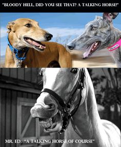"""Two greyhounds joking - They are both boasting to each other about their racing victories. The first dog says """"I've won six of my last ten races"""". The second dog replies with """"That's nothing, I've won fourteen of my last twenty races"""". At this point a fed up racehorse pokes his head round the corner and says """"You're both pathetic I've won ninety-nine of my last hundred races, and only lost one because I was ill. The dogs look at each other, amazed. """"Bloody hell did you see that talking…"""
