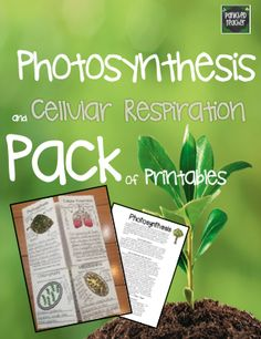 Panicked Teacher's Blog: Photosynthesis and Cellular Respiration