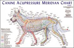 Acupressure may help if a veterinary acupuncturist is not available.