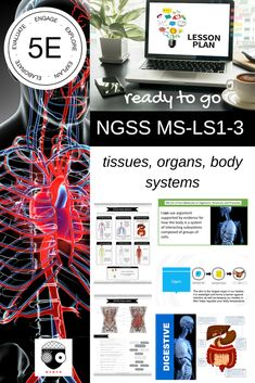 Middle School NGSS Structures and Processes Science Lessons, Life Science, Ngss Middle School, Science Stations, Tissue Types, Next Generation Science Standards, Human Body Systems, Circulatory System, Anatomy And Physiology