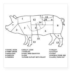 pig labeled body parts diagram sketch coloring page homeschool Diagram Body Pig Gfetal pig parts sticker on cafepress com
