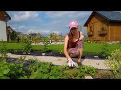 Ściółkowanie trawą - naturalny sposób na chwasty w ogrodzie - YouTube Bulb Flowers, Gardening, Youtube, Lawn And Garden, Youtubers, Youtube Movies, Horticulture