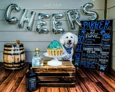 Dog birthday cake smash by Sarah Colombo Photography   #dog #birthday #cakesmash #smashcake #puppy #goldendoodle petphotography