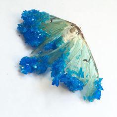 Tyler Thrasher #luna #moth #crystallized