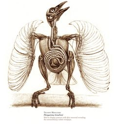 The Unfeathered Bird: An Illustrated History of Avian Anatomy | Brain Pickings    this looks fun