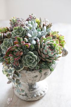 succulent arrangement -Beautiful succulent arrangement - Know What Gurus Think About Assorted Succulents 79 115 unique and beautiful container garden ideas page 3 Propagating Succulents, Succulent Gardening, Succulent Terrarium, Cacti And Succulents, Planting Succulents, Planting Flowers, Growing Succulents, Flowers Garden, Succulents In Containers