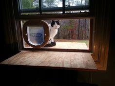 puerta gato ventana