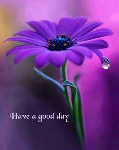 Good Morning Gif Images, Good Morning Images Flowers, Flowers Nature, Exotic Flowers, Pretty Flowers, Flower Images, Flower Pictures, Flower Art, Beautiful Flowers Wallpapers