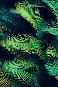 So many shades of green. CH: I plan on using a palm frond or other tropical leaf pattern as the background for my napkin. Deco Design, Print Design, Natural Forms, Natural Texture, Shades Of Green, Textures Patterns, Palm Trees, Palm Tree Leaves, Plant Leaves