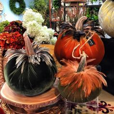Hot Skwash Ideas with Pictures of all Daria's Amazing Designs! Velvet Pumpkins, Fabric Pumpkins, Fall Pumpkins, Halloween Pumpkins, Fall Halloween, Halloween Crafts, Halloween Decorations, Thanksgiving Crafts, Fall Crafts