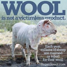 Why you should avoid wool