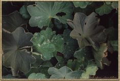 Matthew Wood's website... he's a fantastic herbalist with a lot of valid information!