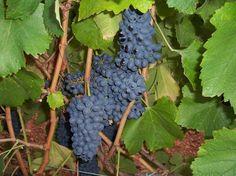 Las Pequeñas regiones vinícolas de nuestro país reclaman su espacio en el 1er Concurso Nacional de Pequeñas D.O.'s   SoyRural.es