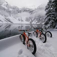 Image result for fat bikes