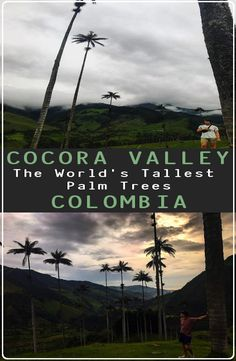 The beautiful Cocora Valley is located in the middle of three big columbian cities: Bogotá, Medellín and the capital of salsa, Cali. Ecommerce Hosting, Palm Trees, Bucket, World, Pictures, Colombia, Palm Plants, Photos, The World