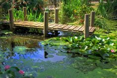 images of pond docks | Here's a pretty lily pond with dock.