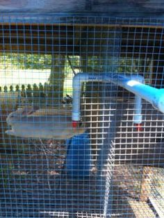 Adapting a chicken nipple waterer into a rabbit waterer provides automatic water, with the added bonus of a drip line for nearby plants. All About Rabbits, Raising Rabbits For Meat, Meat Rabbits, Vivarium, Angora Rabbit, Bunny Rabbit, Rabbit Waterer, Rabbit Behavior, Rabbit Crafts