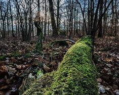 Having my daily walk this morning. Learn everyday something new... Web: https://d4bk.de . . . #d4bk #landscapephotography #landschaftsfotografie #tutorial #winter #travel #reise #adventure #abenteuer #wanderlust #landscapes #landschaften #picoftheday #fotodestages #amazing #erstaunlich #earth #erde #explorer #photography #fotografie #season #2018 #march #märz #voerde #moos #trees #nature_brilliance #nature_perfection