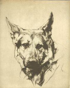Vintage 1935 Black And White Dog Print  Alsation / German Shepherd