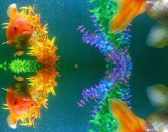 ✧☽ Tank splotches 'Aqua Neeko' ☾✧ #bohemefithome #goldfish Goldfish, Aqua, Pets, Animals, Water, Animaux, Animal, Animales, Animais