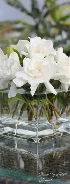 White Cottage, Country Charm, Shades Of White, Flower Centerpieces, White Light, Wonders Of The World, White Flowers, Plants, Bouquets
