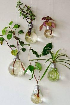 ¿Sabías que puedes utilizar bombillas fundidas como tiestos?