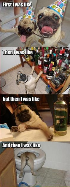 Pug puppy is a party animal.